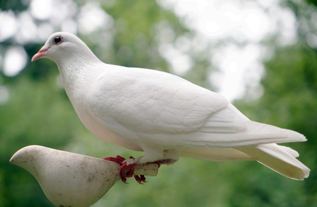 white dove on stone ornament